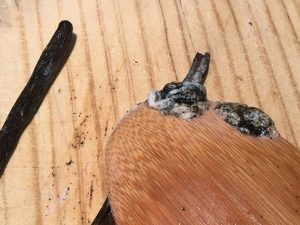 Extrayendo las semillas de la vainilla